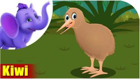 Kiwi – Bird Song (4K)