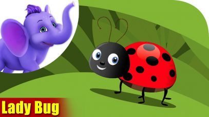 Lady bug – A Bug Song (4K)