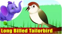 Long Billed Tailor Bird – Bird Song (4K)