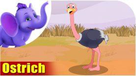 Ostrich – Bird Song (4K)