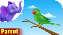 Parrot – Bird Song (4K)