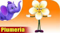 Plumeria – The Flower Song (4K)