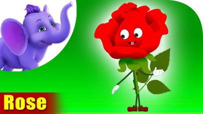 Rose – The Flower Song (4K)