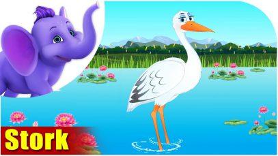 Stork – Bird Song (4K)