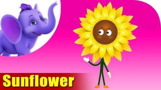 Sunflower – The Flower Song (4K)