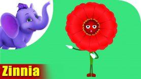 Zinnia – The Flower Song (4K)